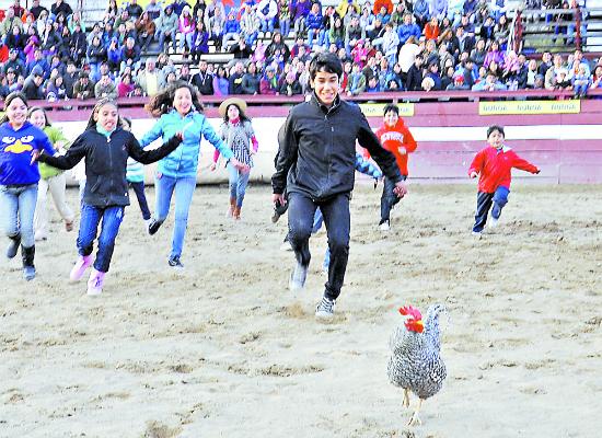 perseguir al gallo