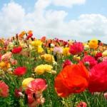Musica para celebrar la Primavera