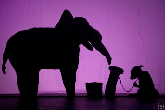Shadow_Elephant_IMG_9139_Emmanuel Donny
