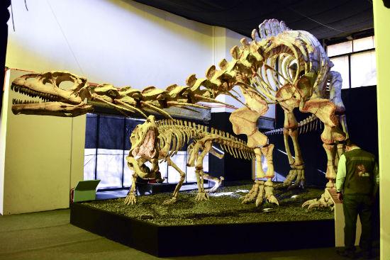 Dinosaurios-8