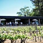 Un paseo por viñas maulinas