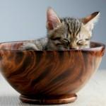 Cafés con gatos: Donde ellos juegan y se pasean por las mesas