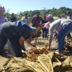 Fiesta de carpinteros en Ancud