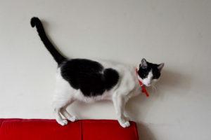 Mes de los gatos: 2 jornadas para adoptar y ser feliz