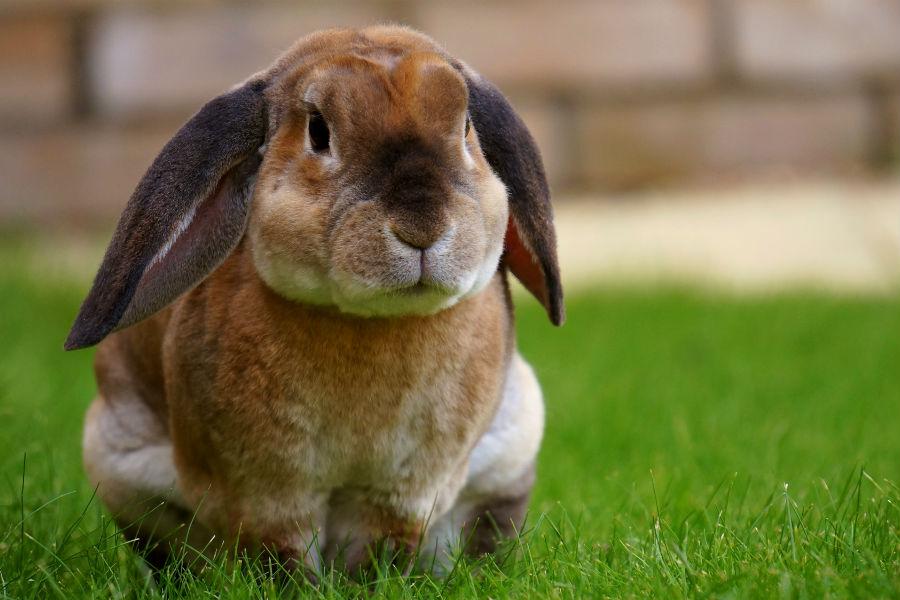 Pascua con conejos de verdad