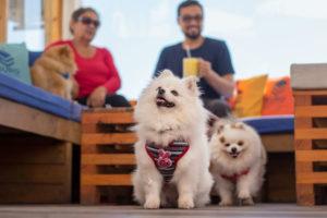 De copas con la mascota: 6 restaurantes y bares petfriendly