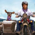 Amor perruno: 12 lugares para ir con mascotas