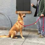 Adiestramiento canino -Doglovers - Hundshop