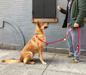 Para doglovers: adiestramiento canino + brunch