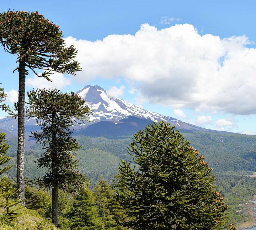 Trekking en Chile: Parque Conguillío