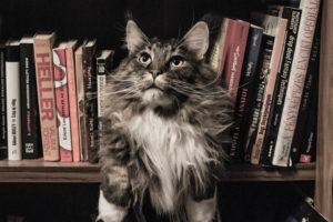 5 libros felinos para leer en el Mes de los Gatos