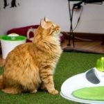 Catlovers: Las tiendas que los amantes de los gatos tienen que visitar