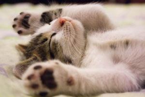 Especial gatuno: Todo para celebrar el Mes de los Gatos
