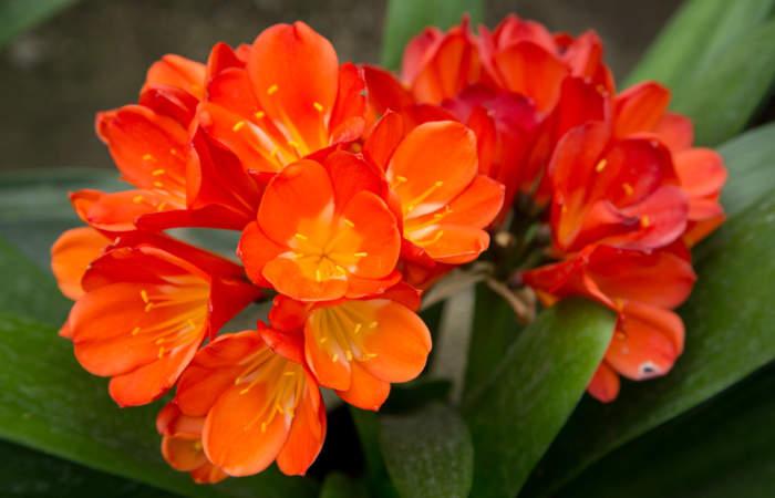 Jardín San Enrique: un vivero de flores exóticas en La Florida