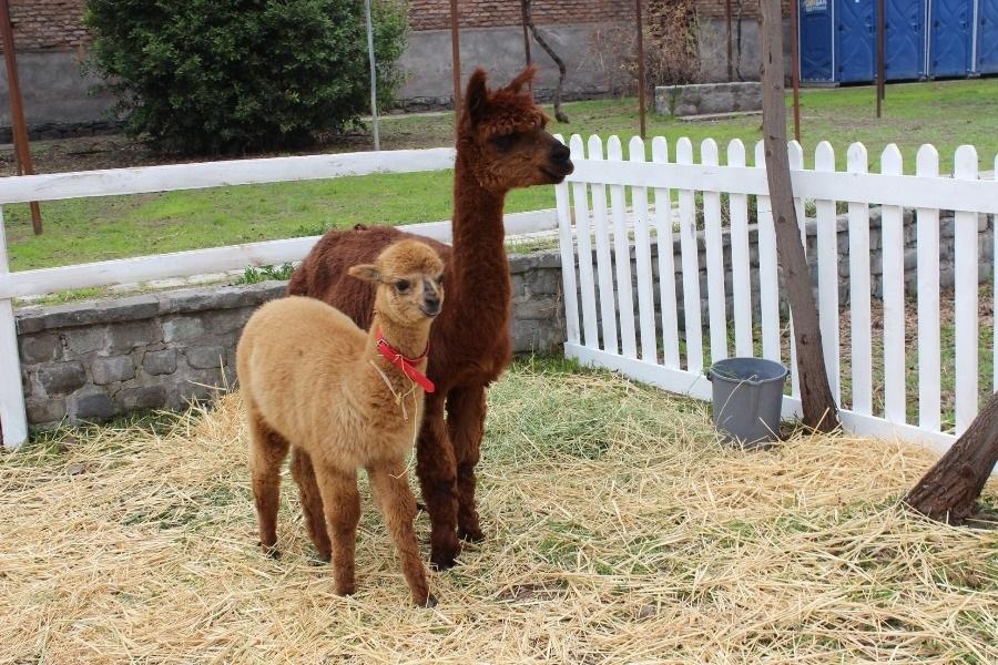 La plaza de Vitacura que se convertirá en una entretenida granja de animales
