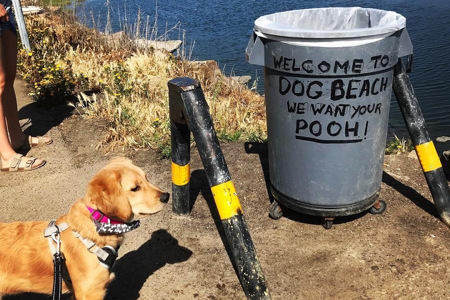 Nueve increíbles sitios para ir con mascota - Turismo Rural Petfriendly