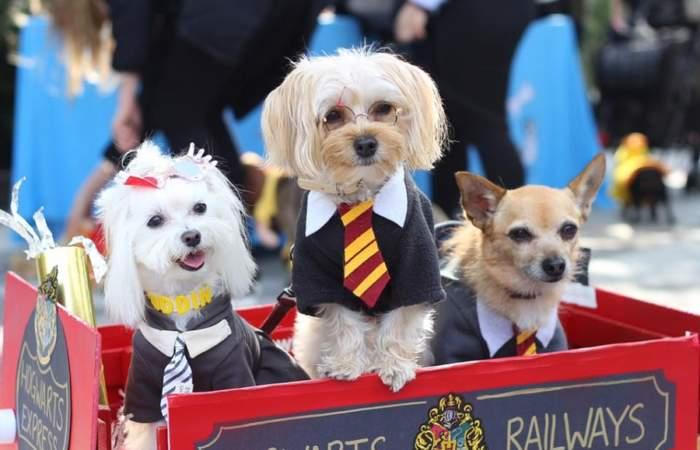 9 lugares increíbles para ir con perros en el mundo