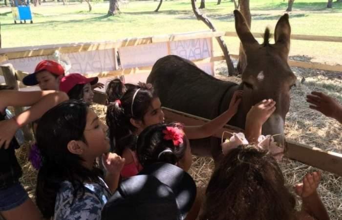 Más de 25 entretenidos panoramas para hacer con niños estas vacaciones de verano