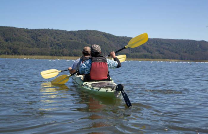 El inolvidable paseo en kayak por Valdivia junto a los cisnes de cuello negro