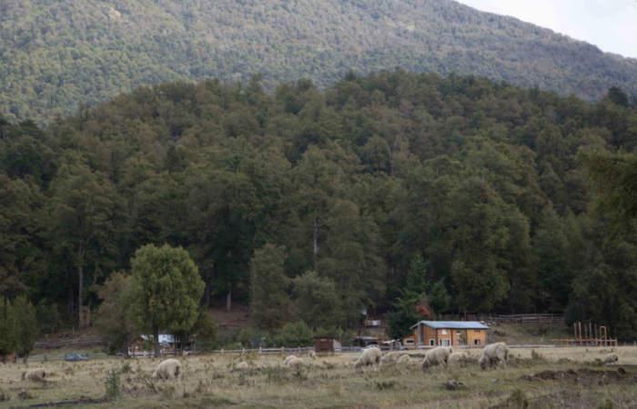 6 panoramas imperdibles para hacer en la Patagonia Argentina