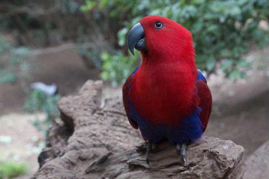Aviario Parque Tricao