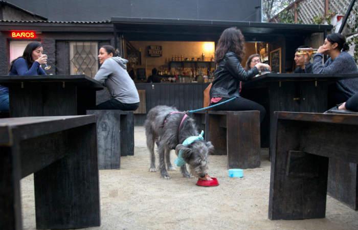 Mascotas bienvenidas: 8 lugares donde puedes ir con tu perro