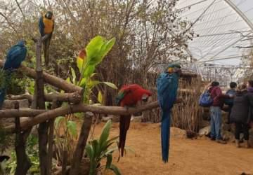 Buin Zoo se renueva con un colorido aviario tropical