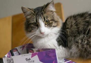 Se viene un nuevo GatoFest, la feria favorita de los adictos a los felinos
