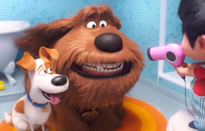 La Vida Secreta de tus Mascotas 2: Max y sus amigos retornan con nuevas aventuras
