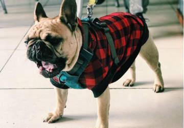 Mascotas bienvenidas: 10 lugares donde puedes ir con tu perro