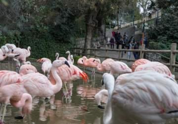 Todo lo que puedes hacer en el Parque Metropolitano de Santiago