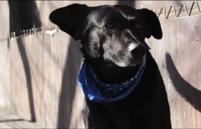 Este es el documental que cuenta la historia del perro ícono de las protestas