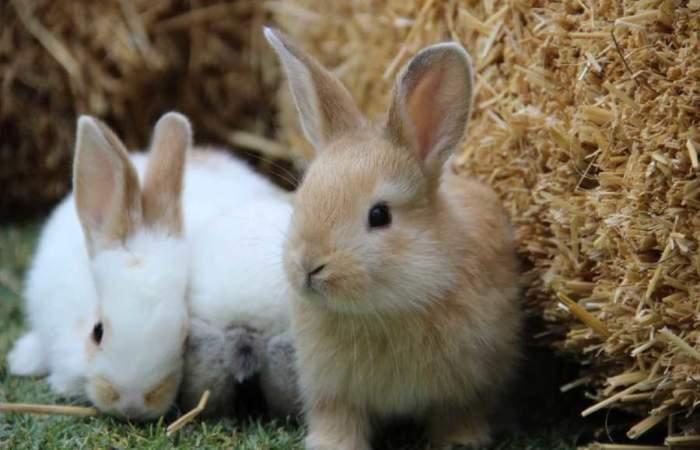 Animal Park le pondrá ternura a las vacaciones con un baby zoo en el Parque Araucano
