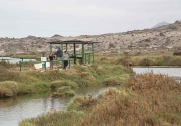 Un paseo por el lado b de la Región de Atacama: Ballenas, humedales, locos y una copa de pajarete