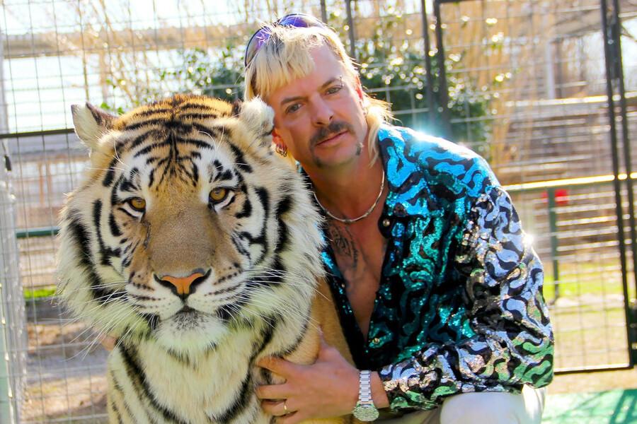 Rey Tigre 2