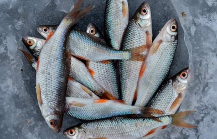 Estos son los horarios y medidas sanitarias del Terminal Pesquero en Semana Santa