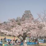 Celebra el festival japonés de Los Cerezos