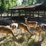 Restaurantes con mini zoo: un paseo dos por uno