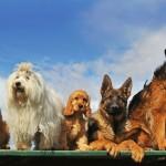 GANADORES: Entradas para una exhibición de perros este finde