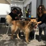 Café con perros