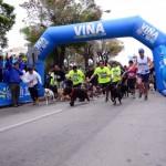 Perro running por Viña