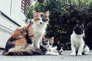 Pasar el día con gatos