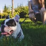 Aprender a educar a su perro