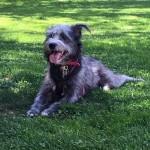 Clubes de mascotas: Fiestas para perros