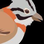 Gratis: Aprender a cantar como pájaro