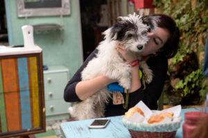 Mascotas bienvenidas: 4 cafés petfriendly