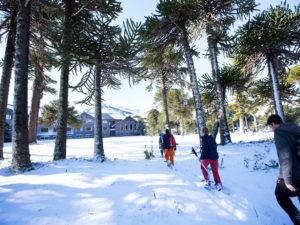 Corralco, el centro de esquí que está en un bosque de araucarias