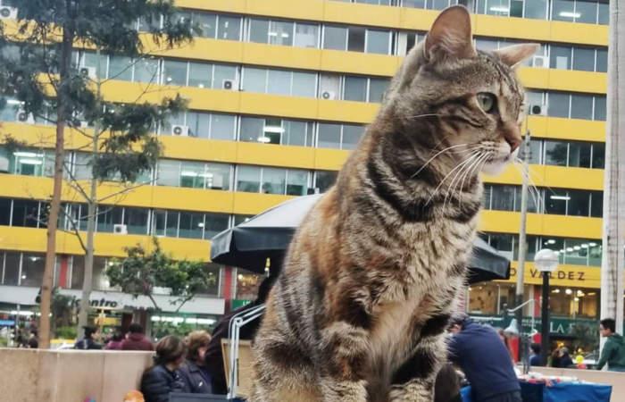 El parque de Perú que todo amante de los gatos debe visitar