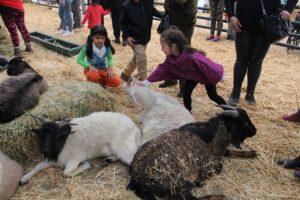 Animal Park: animales para ver y tocar en el Parque Quinta Normal
