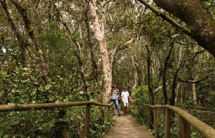 Parque Nacional Fray Jorge: un bosque único en medio del desierto